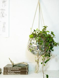 disco globe as a planter. think about all the other goodwill finds you can get and reuse this way!