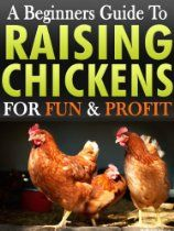 Raising Chickens: A Beginners Guide To Raising & Keeping Chickens For Fun & Profit In Your Backyard For Free Range Eggs & Meat