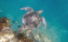 Bucket List No.7: Swim with the turtles on the Galapagos Islands...