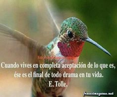 Alto al drama. Hot Quotes, Smart Quotes, Daily Quotes, Eckhart Tolle, Motivational Thoughts, Inspirational Quotes, Drama, Spiritual Messages, Special Words