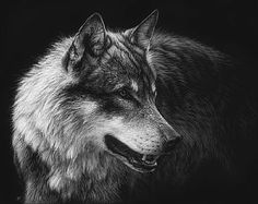 European Wolf - Painting Art by Cristina Penescu