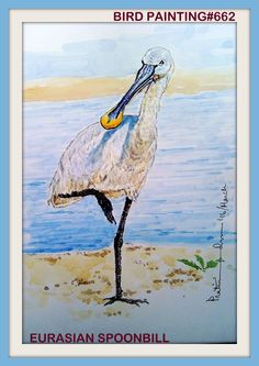PAKHI DEKHOON PAKHI CHINOON #662. OBSERVE THE BIRD AND RECOGNIZE...EURASIAN SPOONBILL... WATERCOLOUR...A4... 2016..[From the photograph of Mr. Sumit Sengupta]... The Eurasian spoonbill or common spoonbill (Platalea leucorodia) is a wadingbird of the ibis and spoonbill family Threskiornithidae.  This is a Palearctic species, breeding from the United Kingdom and Spain in the west through to Japan, and also in North Africa. In Europe, only The Netherlands, Spain, Austria, Hungary and