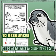 Mediterranean Monk Seal -- 10 Resources -- Coloring Pages, Reading &…