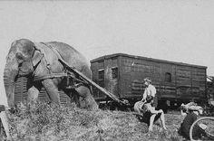 Wirth's Circus