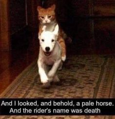 memes laughing so hard lol Cats are cute and sometimes unintentionally do stupid funny things, so we have collected some the funniest and most hilarious cat memes and pictures hope you will enjoy em. Cute Animal Memes, Animal Jokes, Cute Funny Animals, Funny Animal Pictures, Funny Cute, Funny Dogs, Hilarious Animal Memes, Funny Looking Animals, Funny Kitties