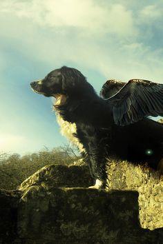#Black #Dogs Flying Dog