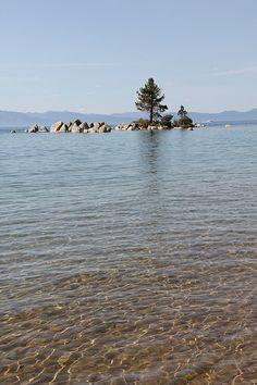 Lake tree / http://www.sleeptahoe.com/lake-tree/