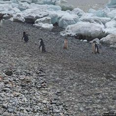 Antarctica | Instant Street View Wall Of Water, Antarctica, Special Events, Street View