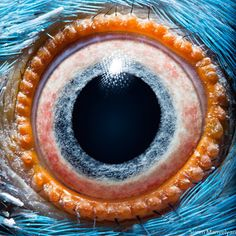 Animal eyes Armenian-based photographer Suren Manvelyan captures the eyes of different animals in her latest series. Each eye takes on different colours and awesome patterns appear in the iris of each animal. Eye Close Up, Extreme Close Up, Close Up Art, Photos Of Eyes, Close Up Photos, Iris, Regard Animal, Georg Christoph Lichtenberg, Foto Macro
