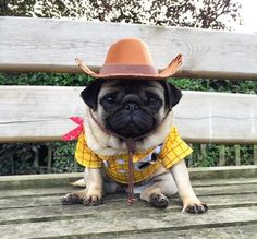 lil cowboy pug Kick start your weight loss today with www.skinnycoffeeclub.com. Plus get 10% off with the code PINTEREST10 at the end of checkout.