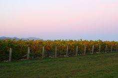 wine tasting in blenheim, new zealand