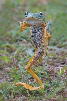 The frog that thinks it's the Karate Kid – Görges, Carola The frog that thinks it's the Karate Kid Kung fu froggy! Everybody likes Kung fu fighting Cute Funny Animals, Funny Animal Pictures, Cute Baby Animals, Animal Pics, Funny Photos, Funny Frogs, Cute Frogs, Nature Animals, Animals And Pets