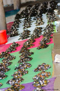 mussels on sale in the Nadi Markets in Fiji