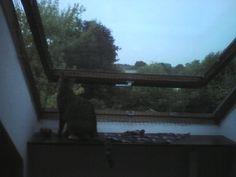 Katzennetz am schrägen Dachfenster - Katzen Forum