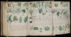 The mysterious Voynich Manuscript. No one has ever been able to crack the code and decipher the script or the mysterious medical and botanical imagery.
