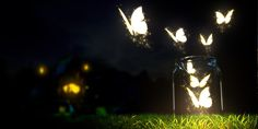 Light Night Grass Twitter Cover & Twitter Background | TwitrCovers