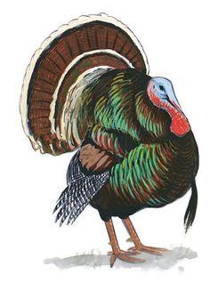 Birds of North America Field Guide | Audubon
