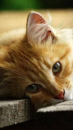 Sweet kitty picture