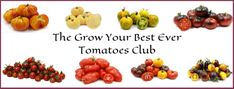 Hello fellow Tomato growers so what's this membership club all about? Well from feedback i have received and general information gleaned from other sources its seem a lot of people struggle h… Tomato Growers, Grow Tomatoes, Dog Food Recipes, Knowledge, Draw, Club, People, To Draw, Dog Recipes