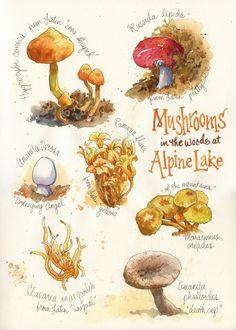 Everyday Artist: Mushroom Sleuthing