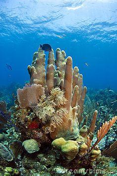 Underwater Photos of Coral Reefs Underwater Coral Reef Stock Photo - Image: 15795170 Under The Water, Under The Ocean, Sea And Ocean, Ocean Underwater, Underwater Photos, Underwater Photography, Film Photography, Street Photography, Underwater Bedroom
