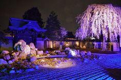 桜 tera - Google 検索