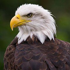 В душе ты — орел