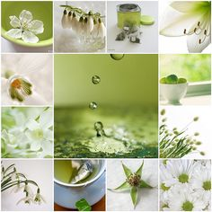 These beautiful photos are the property of the talented photographers linked to below.  If you love these images, please let the photographers know.  Share the love!  :)  Enjoy! 1. ., 2. Blossom, 3. snowdrops, 4. Who likes green tea?, 5. Untitled, 6. Die Sonne war kurz da, 7. Limes, 8. White Orchid, 9. Lagurus, 10. spring will.., 11. tea time., 12. Star, 13. Summer Daisies.  Created with fd's Flickr Toys