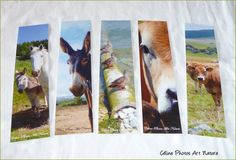 "Lot de 5 marque-pages de Céline Photos Art Nature pétillants""Animaux"" : Marque-pages par celinephotosartnature"