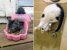 Výsledek obrázku pro cat logic