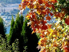 """A beautiful vista to showcase the beginning of autumn in the Lake Country District of the Okanagan Valley in British Columbia, Canada. """"A Week Into Autumn"""" #AWeekIntoAutumn #OkanaganValley #WillBorden"""