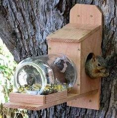 1000+ ideas about Squirrel Feeder on Pinterest | Birdhouses, Bird Feeders and Bird House Plans #birdhouseideas #birdhouseplans