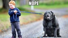 Animals Without Necks   via Facebook
