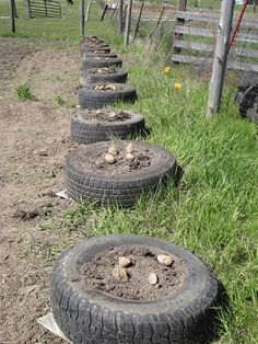 Growing Potatoes In Old Tires - An old tried & tested method, with high yields...