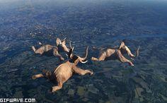 ¿quién dijo que los elefantes no vuelan? #Evidencia