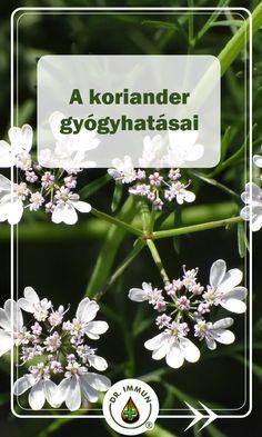 Herbalism, Health Fitness, Herbs, Plants, Cilantro, Herbal Medicine, Herb, Plant, Fitness