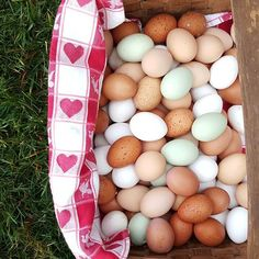 Farm Fresh...Just gathered and ready to cook...How do you like your eggs?
