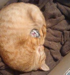 22 gatinhos sonolentos que só querem dormir mais um pouquinho