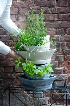 Een ideale bloempot waarin drie verschillende planten kunnen worden geplant #gardening