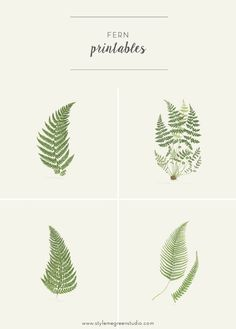 I have received quite a few emails about where I got the fern botanical prints in my bedroom. So, I thought I'd address the question with some free printables!