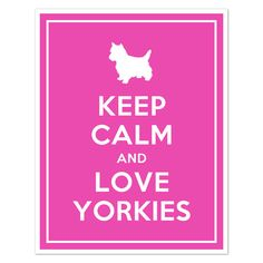 My next fur baby is going to be a Yorkie.