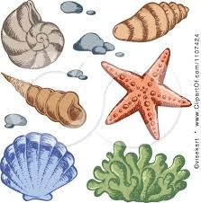 Image result for sea coral drawings