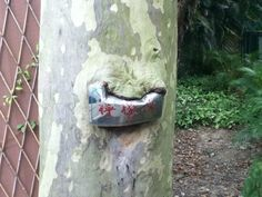 This tree got hungry and decided to eat a sign. | 28 Plants That Completely Forgot How To Plant