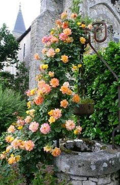 Climbing roses & wishing well ♥