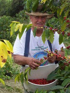 Fazenda de café em Kailua-Kona, Havaí, USA.  http://www.portalanaroca.com.br/quem-ja-fez-isso-5/