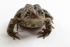 american-toad, via stillblog.net. She has the most amazing photographs!
