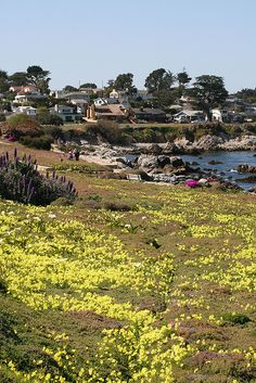 Monterey Bay Coastal Trail in Pacific Grove, Monterey, California Pacific Grove California, Monterey California, Monterey County, California Dreamin', Northern California, Central California, Monterey Bay, Wonderful Places, Beautiful Places
