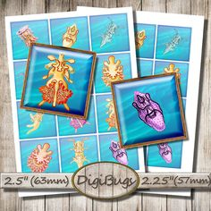 Sea Animals, Digital Collage Sheet, Printable Squares, Sea Life, Sea Slugs Jellyfish for Magnets, Instant Download, Printable Sea Images, b4 Slug, Collage Sheet, Digital Collage, Jellyfish, Under The Sea, Squares, Magnets, Printable, Frame