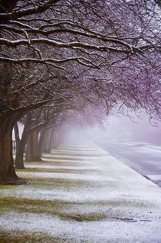 ^Winter Trees