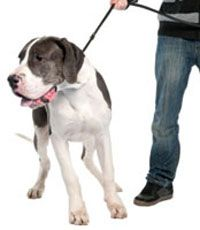 Teach+your+dog+how+to+walk+on+a+leash.+Stop+leash+pulling+with+these+essential+leash+training+tips.+